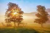 sunrise beams through the foggy tree  Krajobraz Fototapeta