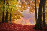 Foggy mystic forest during fall  Krajobraz Fototapeta