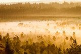 Misty Trees in the Morning  Krajobraz Fototapeta