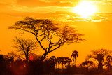 Orange glow of an african sunset  Afryka Fototapeta