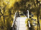 Japanese bridge over the water  Mosty Fototapeta