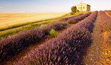 chapel with lavender and grain fields,Valensole,Provence  Prowansja Fototapeta