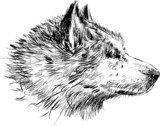 head of a dog  Drawn Sketch Fototapeta