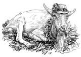 The goat on haystack  Drawn Sketch Fototapeta