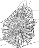 black spider web on white  Drawn Sketch Fototapeta