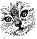 snout kitten  Drawn Sketch Fototapeta
