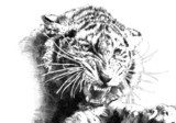 tiger power art illustration  Drawn Sketch Fototapeta