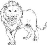 hand drawn lion  Drawn Sketch Fototapeta