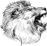 lion head hand drawn  Drawn Sketch Fototapeta