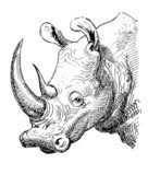 artwork rhinoceros, sketch black and white drawing  Drawn Sketch Fototapeta