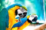 Macaw parrots in the wild with tropical jungle background  Zwierzęta Fototapeta