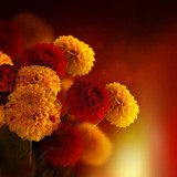 Colorful autumn chrysanthemums with flares, floral background  Sypialnia Plakat