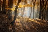 colorful forest in autumn with sun rays  Plakaty do Sypialni Plakat