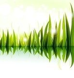 illustration of green grass vector design  Trawy Fototapeta