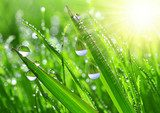 Fresh grass with dew drops close up  Trawy Fototapeta