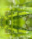 grass and dew drops - macro photography  Trawy Fototapeta