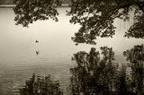 Bird by the lake  Sepia Fototapeta