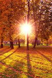 Sunlit Foliage Natural Background  Las Fototapeta