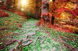 Beautiful autumn forest landscape  Las Fototapeta