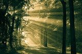 Sun rays shining through the trees, vintage look.  Las Fototapeta