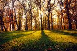 Landscape with sun beams in the autumn wood  Las Fototapeta