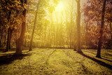 Sunlight in the park - autumn season  Las Fototapeta