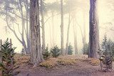 morning fog in the woods  Las Fototapeta