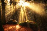 beautiful forest and sunbeams  Las Fototapeta