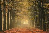 Warm autumn colors in a lane in the forest.  Las Fototapeta