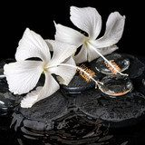 Beautiful cryogenic spa concept of delicate white hibiscus, zen  Czarno Białe Obraz