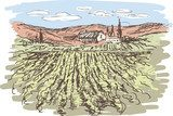 Vineyard  Drawn Sketch Fototapeta