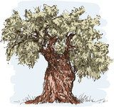 olive tree  Drawn Sketch Fototapeta