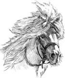 pony head  Drawn Sketch Fototapeta