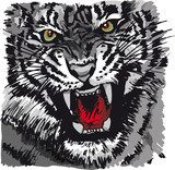 Sketch of tiger. Vector illustration  Drawn Sketch Fototapeta