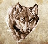 Sketch of tattoo art, Illustration of a Wolf head  Drawn Sketch Fototapeta