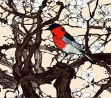 Little imaginary red bird in a sakura  Drawn Sketch Fototapeta
