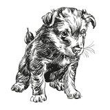 puppy dog hand drawn vector llustration  Drawn Sketch Fototapeta