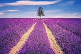 Lavender field and tree  Prowansja Fototapeta