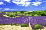 beautiful lavander fields, Provance, Valensole, France  Prowansja Fototapeta