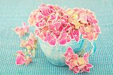 Pink hydrangea flowers in a cup on a blue background .  Kwiaty Obraz