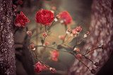 wild roses bush branches between tree branches  Kwiaty Obraz