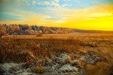 Field, forest, dry grass - beautiful landscape at sunset  Krajobrazy Obraz