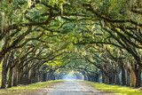 Country Road Lined with Oaks in Savannah, Georgia  Obrazy do Salonu Obraz