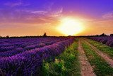 Lavender field  Obrazy do Salonu Obraz