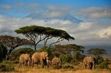 Elephant family in front of Mt. Kilimanjaro  Afryka Fototapeta