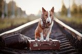 English bull terrier on rails with suitcases.  Zwierzęta Plakat