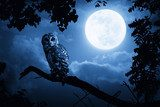 Owl Illuminated By Full Moon On Halloween Night  Zwierzęta Plakat
