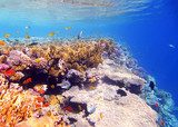 Coral and fish in the Red Sea Rafa koralowa Fototapeta