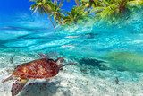 Green turtle swimming at tropical island of Caribbean Sea Rafa koralowa Fototapeta
