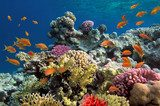 Underwater shoot of vivid coral reef with a fishes Rafa koralowa Fototapeta